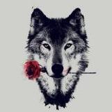 WolfyFSN