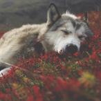 nebeL_wolF_94