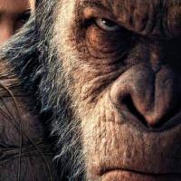 [TR] GoriL