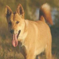 [GlobEx] Dingo