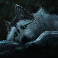 Black Wolf Harmful