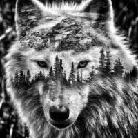 [CML] Tobi23 Wolfmann